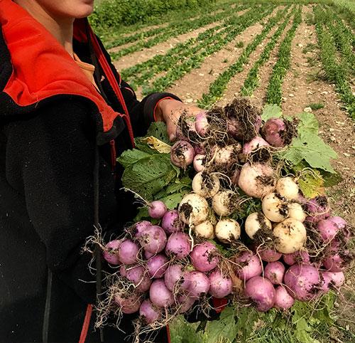 fruits-et-legumes-bio