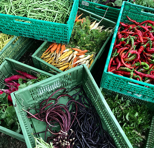 legumes-bio-saison-france