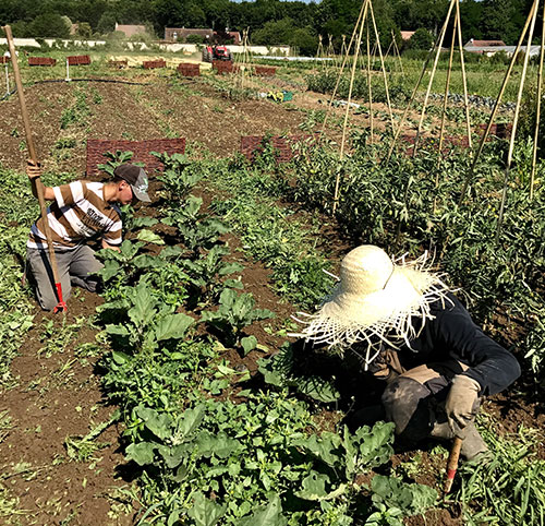 legumes-de-saison-tomato