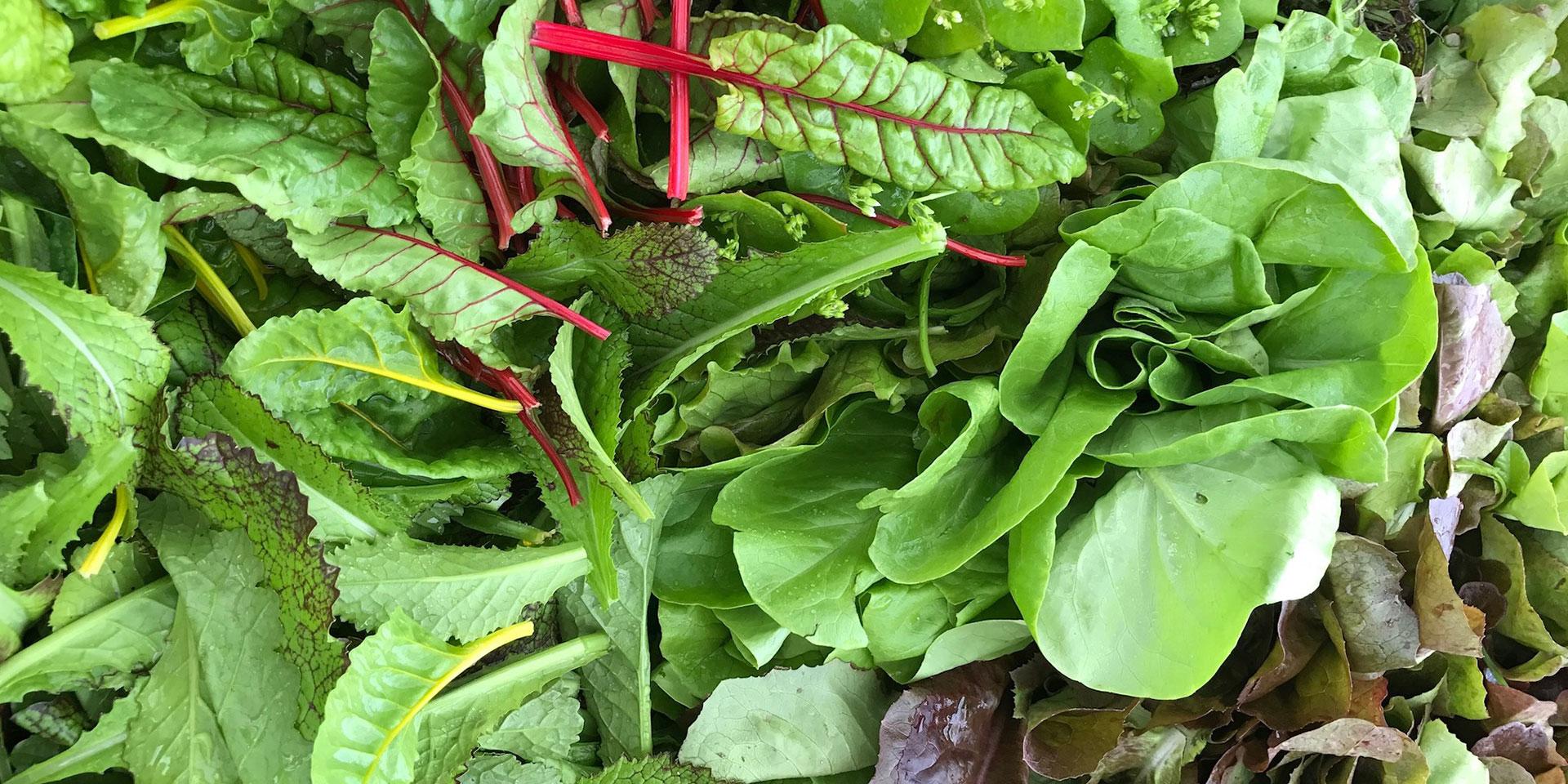 pousses-salades