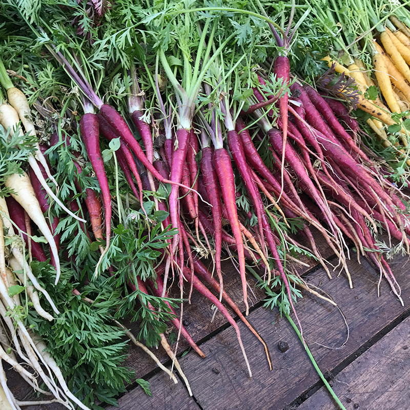 variete-carottes-legumes-tomato