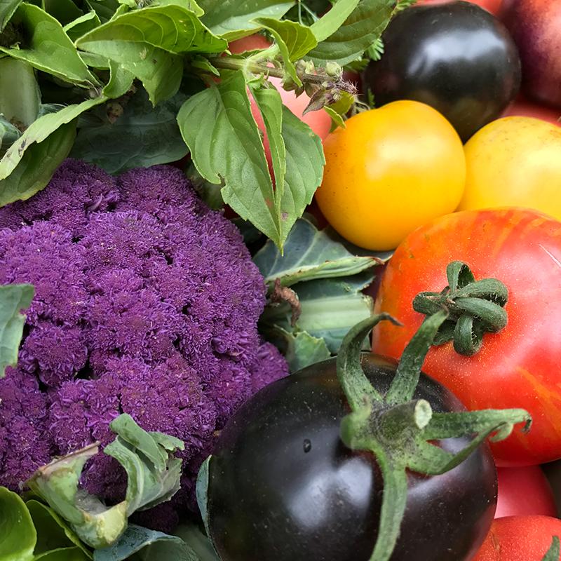 variete-legume-tomato