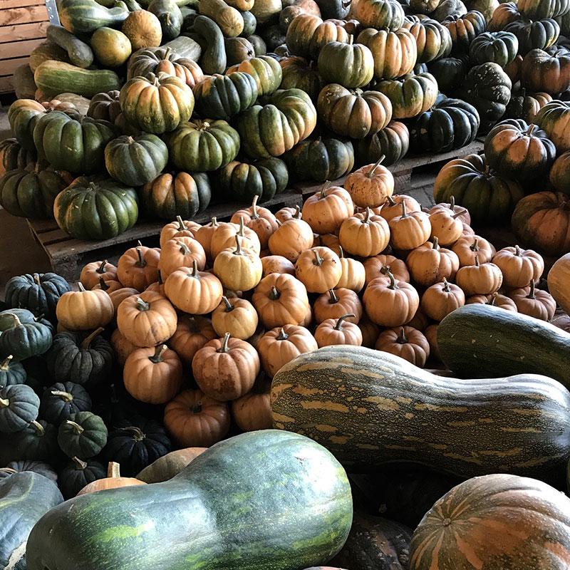 variete-legumes-bio-tomato